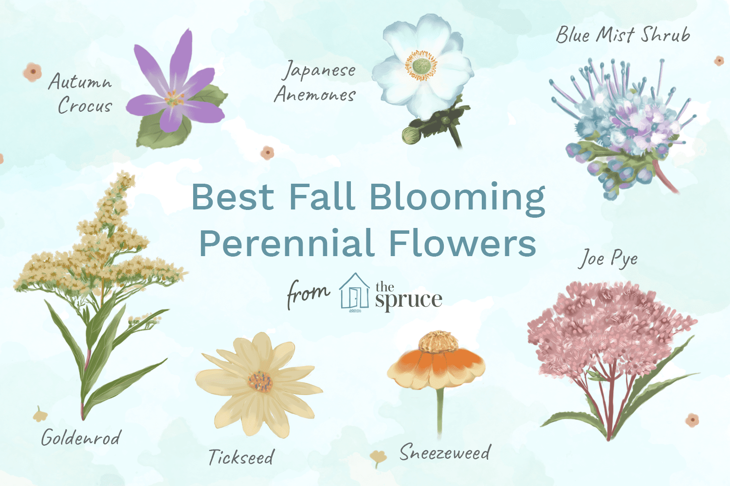 perennial flower identification guide by color