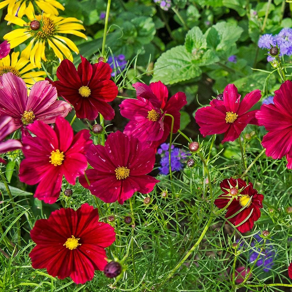 flower planting guide zone 6